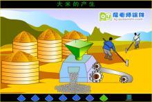 小班科学活动《大米的产生》FLASH动画课件下载