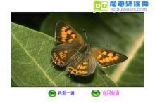 幼儿园大班美术《蝴蝶的翅膀真美丽》FLASH课件下载