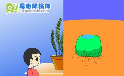 幼儿园学前班科学《古老的蕨类植物》FLASH课件2