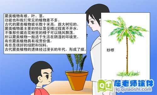 幼儿园学前班科学《古老的蕨类植物》FLASH课件1