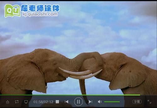 大象视频MP4——3