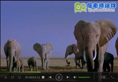 大象视频MP4——2