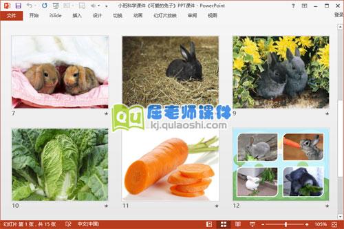 小班科学课件《可爱的兔子》PPT课件3