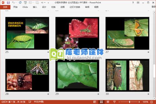 小班科学课件《认识昆虫》PPT课件6