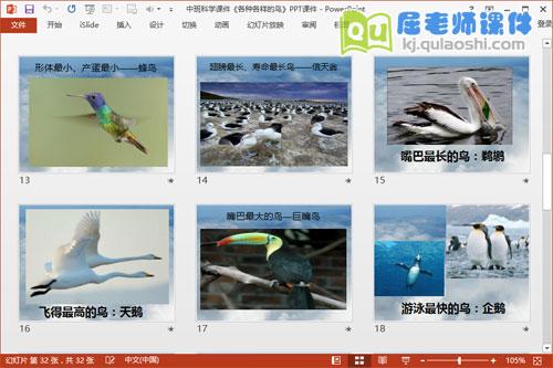 中班科学课件《各种各样的鸟》PPT课件4