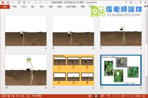 中班科学课件《豆子的生长》PPT课件3