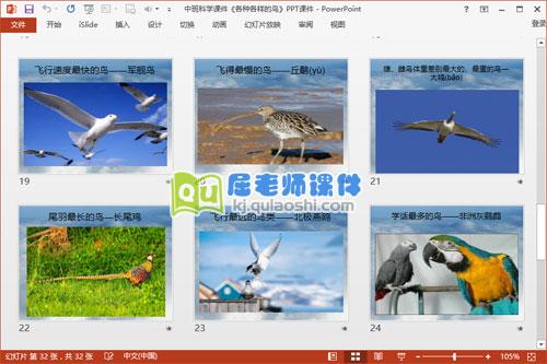 中班科学课件《各种各样的鸟》PPT课件5
