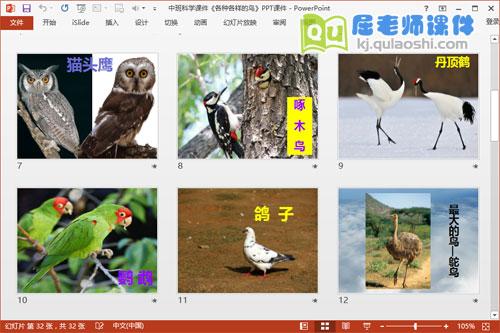 中班科学课件《各种各样的鸟》PPT课件3