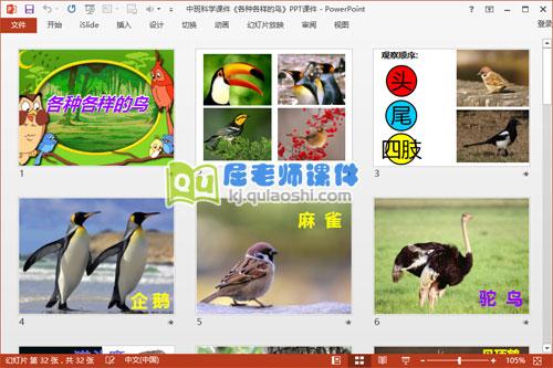 中班科学课件《各种各样的鸟》PPT课件2