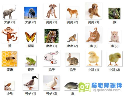 小班英语课件《动物》PPT课件图片音效7