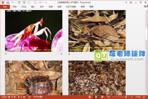 大班科学课件《动物保护色》PPT课件教案图片3