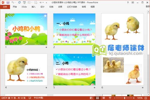 小班科学课件《小鸡和小鸭》PPT课件2