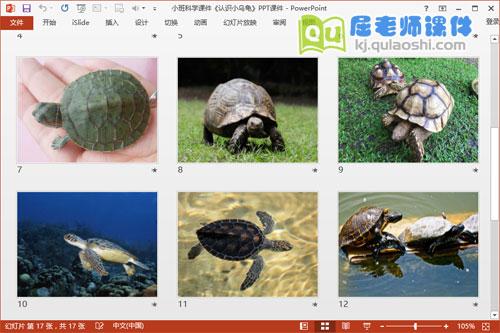小班科学课件《认识小乌龟》PPT课件3