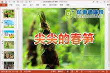 中班科学课件《尖尖的春笋》PPT课件教案图片下载
